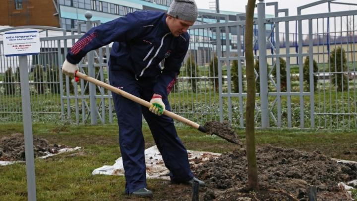 Хоккеисты «Локомотива» высадили аллею с именными клёнами