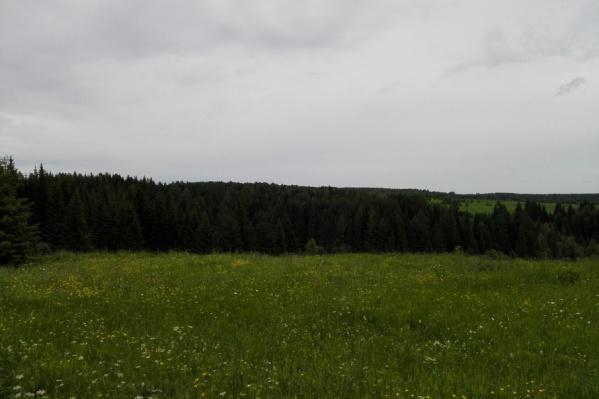 В этом лесу потерялся 10-летний Миша