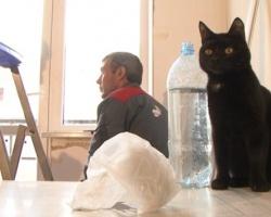 Оконный разгром для кота Артема