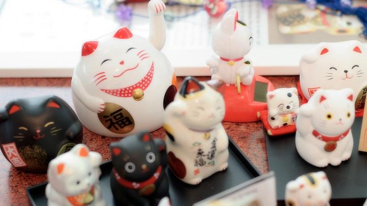 «Няшно» и «кавайно»: фоторепортаж с выставки японских котиков в Челябинске