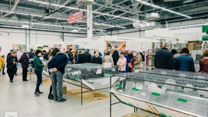 Всё для дачи, растения и животные: на «Пермской ярмарке» открылась выставка «Весенний сад. Дачный сезон»