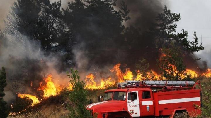 В Архангельской области потушили два лесных пожара, возникших из-за гроз