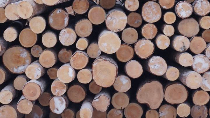 С начала года леспромхозы ГК «Титан» заготовили полтора миллиона кубометров древесины