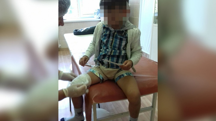 «Никто не знал, что в будке псина»: на пляже отеля «Сугояк» собака укусила ребенка