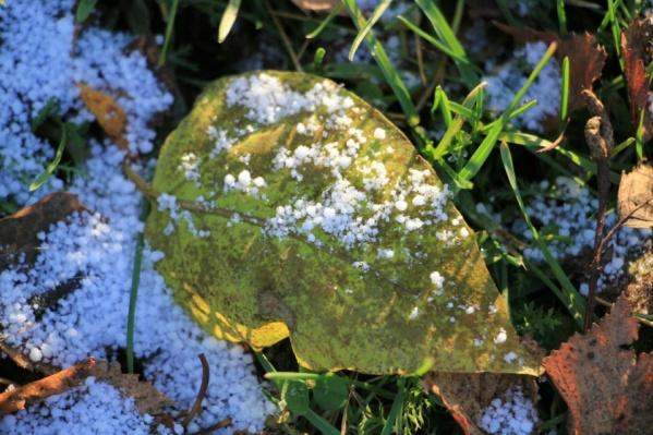 Метеорологи пообещали Поморью снег, правда умеренный