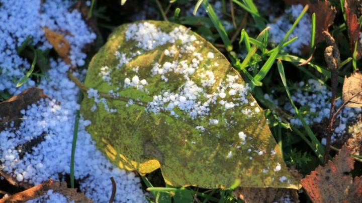 Мини-снеговики и срочная смена резины: архангелогородцы отмечают начало снежного сезона