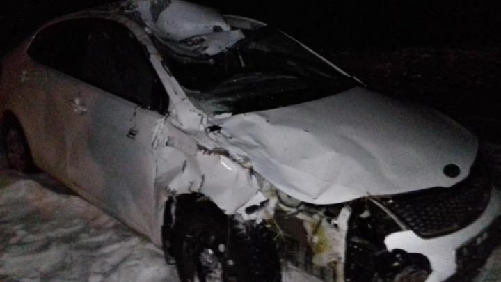 Автомобилист сбил лошадь на ночной трассе в Челябинской области