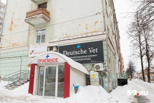 Ветеринарные клиники под угрозой выселения: 90% из них находятся в жилых домах