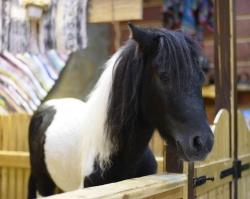 «Трогательный зоопарк» спас от гибели пони Арнюшу