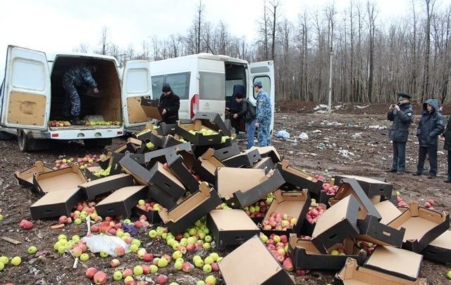 В Перми уничтожили две тонны запрещенных яблок из Польши