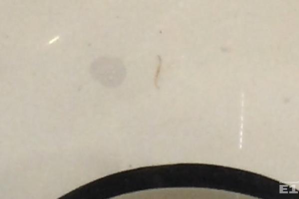 Из крана выпал червяк.