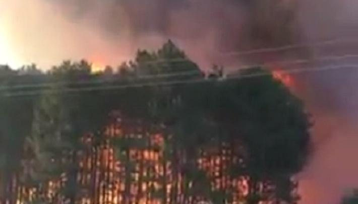 Крупный лесной пожар произошел в Ростовской области