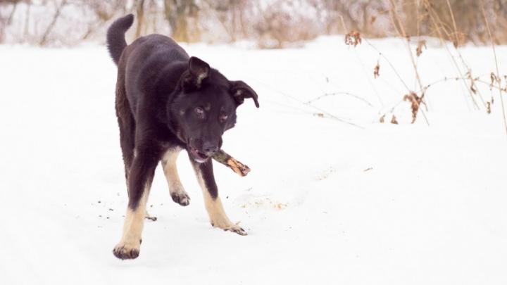 Ярославна отсудила у «Почты России» 20 тысяч за нападение собаки