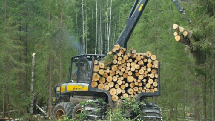 До конца 2017-го группа компаний «Титан» инвестирует в инфраструктуру леспромхозов более 100 млн рублей