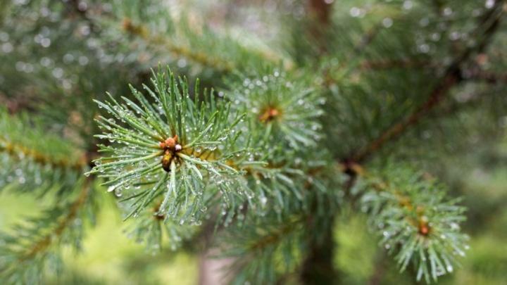 В Ярославской области арестовали мужчину, срубившего 46 деревьев