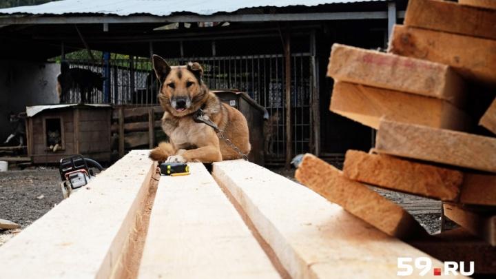 Новые будки и отремонтированная кухня: как за лето изменился пермский приют для собак