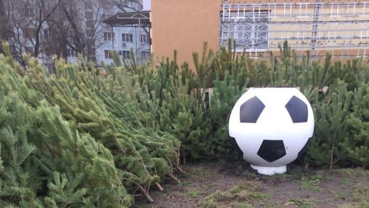 В Ростове разогнали торговцев елками