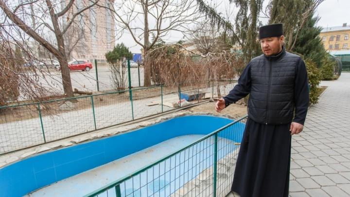 Под Волгоградом откроется райский уголок для раненых птиц