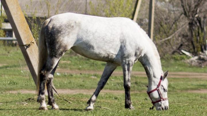 В Ярославской области обнаружили бешеную лошадь