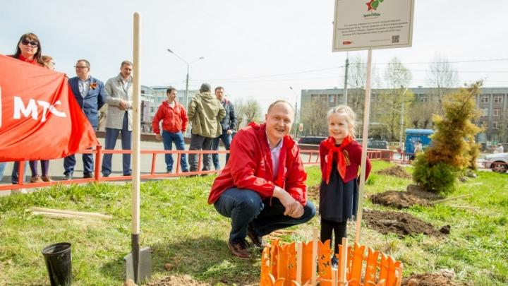 Дерево жизни и надежды: в Ярославле посадили «Тополь Победы»
