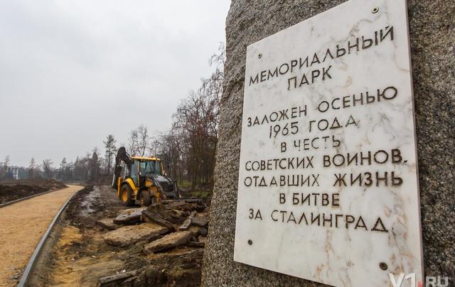 В Волгограде на Аллее России у Мамаева кургана высадят клон легендарного тополя