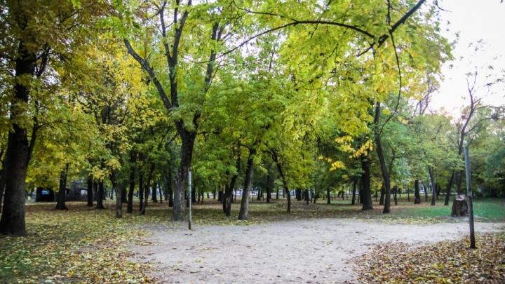 Власти Ростова пообещали посадить новые деревья вместо спиленных в парке Островского