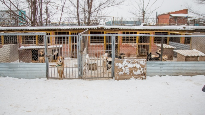 В Самаре приютам для бездомных животных выделят 5,9 млн рублей