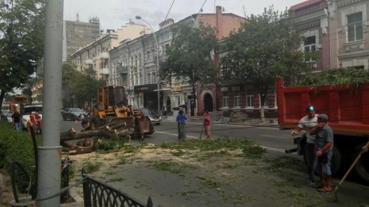 В Ростове из-за ураганного ветра рухнули 82 дерева