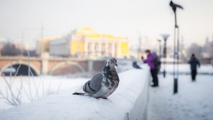 Мороз крепчал: в пятницу в Челябинске похолодает до –30°С