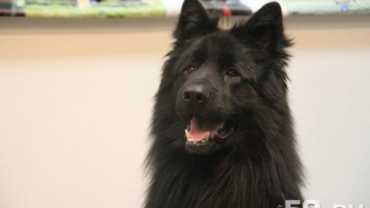 В Перми к августу построят две площадки для дрессировки и выгула собак. Где они появятся