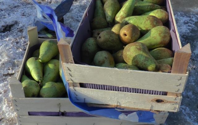 В Самаре уничтожили несколько тонн груши, томатов и лука из Польши и Турции