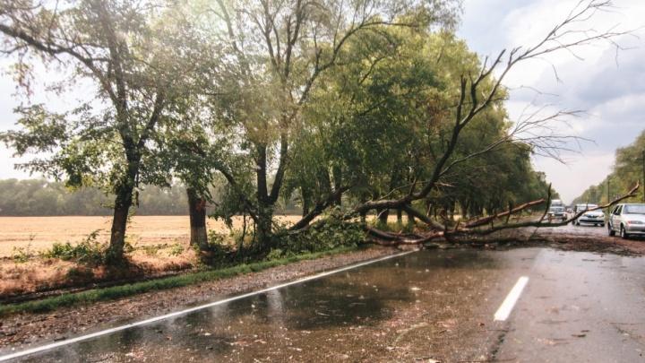 Погода никак не угомонится: в Самарской области опять ожидают дождь, грозу и сильный ветер