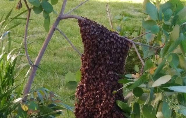 Волгоградцев напугал пчелиный рой около подъезда жилого дома