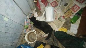 Около двадцати трупов кошек и щенков нашли в одном из домов Екатеринбурга.