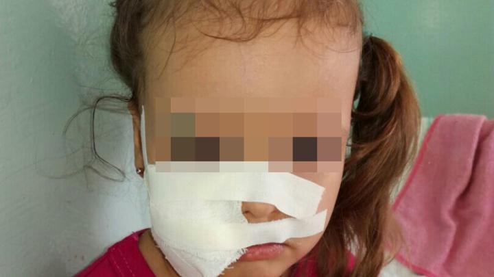 Прокуратура начала проверку детсада под Челябинском, где собака покусала ребёнка