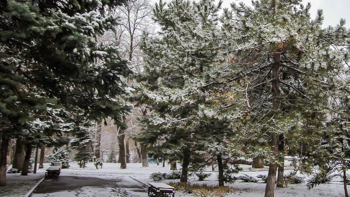 Шахматные площадки, велодорожки и газоны: в Ростове благоустраивают сквер им. Чуковского