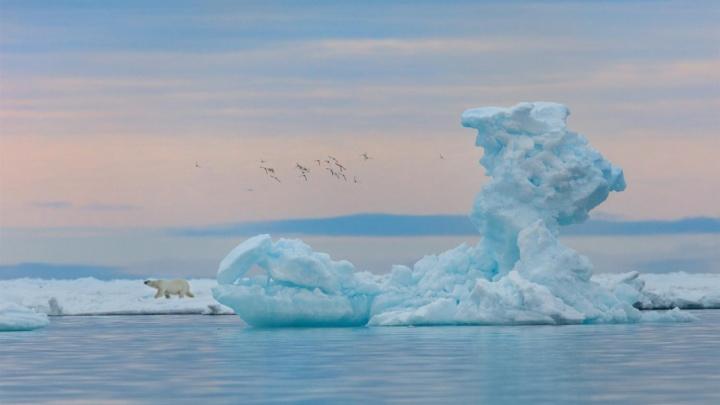 «Второго шанса не будет»: как архангельский фотограф снимает шедевры в Арктике