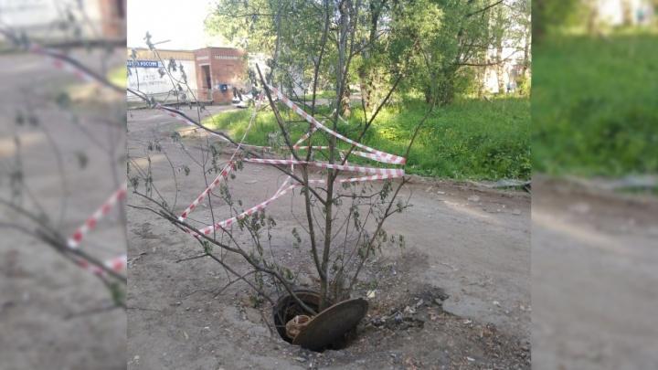 Грут — страж канализации: в Ярославле в открытый люк вставили большую ветку