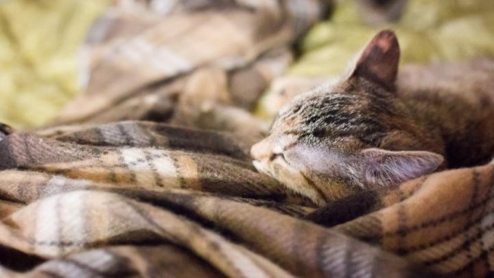 В Семибратово живодёры повесили в сарае котят