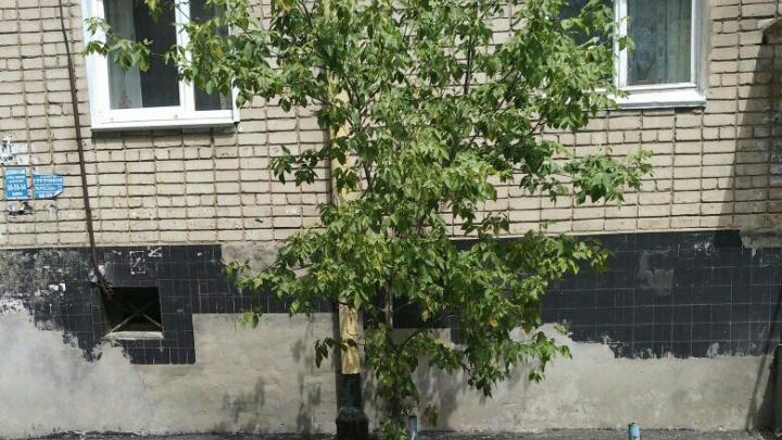 В Волгограде строители, пожалев дерево, закатали его в асфальт