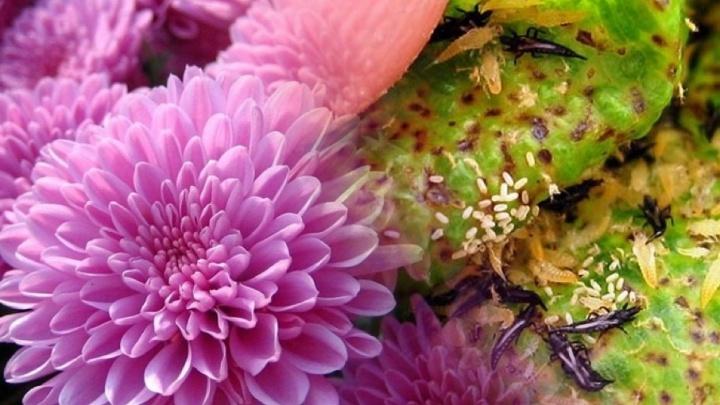 В Самаре в магазине «Ашан» продавали цветы с личинками насекомых
