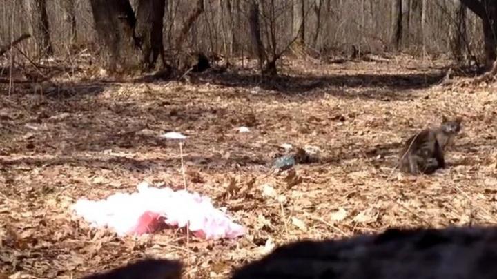 В Самарской области полиция заинтересовалась видео о жестоком обращении с животным