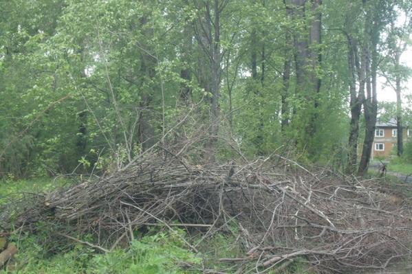 Ветки в парке на Адмирала Макарова не вывезены до сих пор