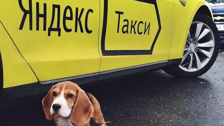 Объединение «Яндекс» и Uber может снизить цены на такси в Ростове