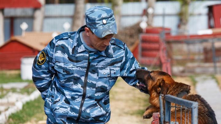 Уникальный ищейка: пес прошел курс по поиску мобильников и теперь по запаху ищет их в тюменской колонии