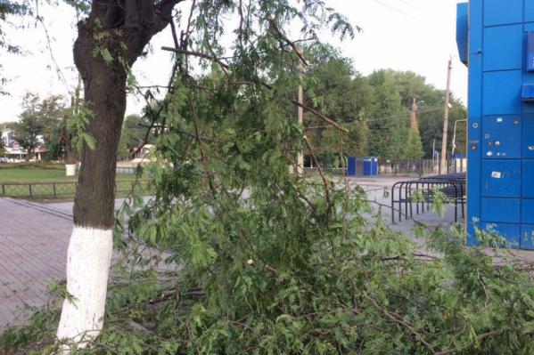 На проспекте Шолохова спилили деревья