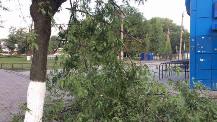Срубать старые деревья в Ростовской области будут только с разрешения общественников