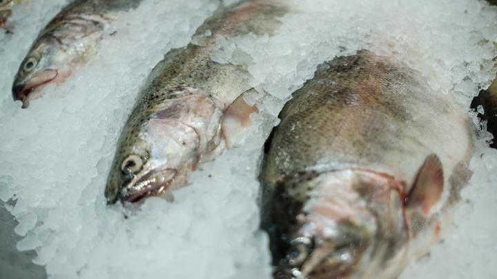 В Прикамье четырем рыбакам грозит два года тюрьмы за рыбалку в местах нереста