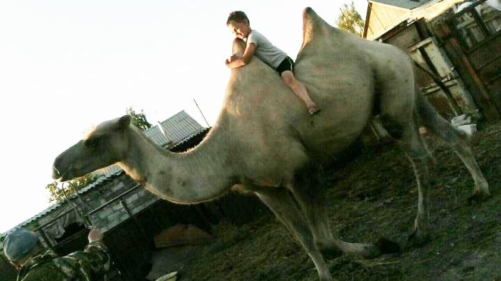 Проще коровы, редкий, как страус: на Южном Урале выставили на продажу верблюда