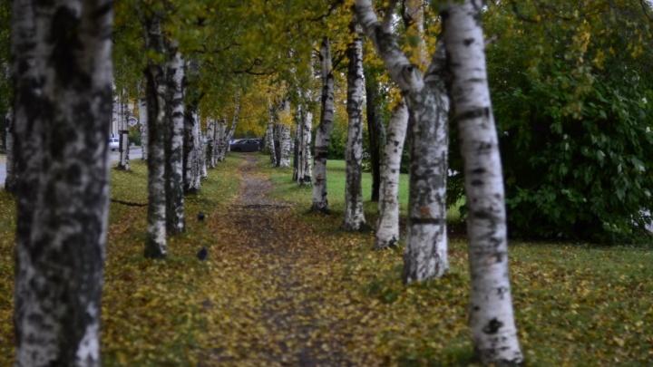 Рабочая неделя в Архангельской области будет дождливой